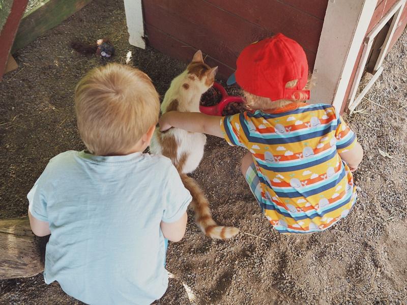 kissoja-kuopio-kotieläinpuisto-taapero-lapsi