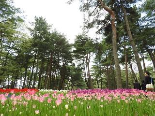 ひたち海浜公園 たまごの森15