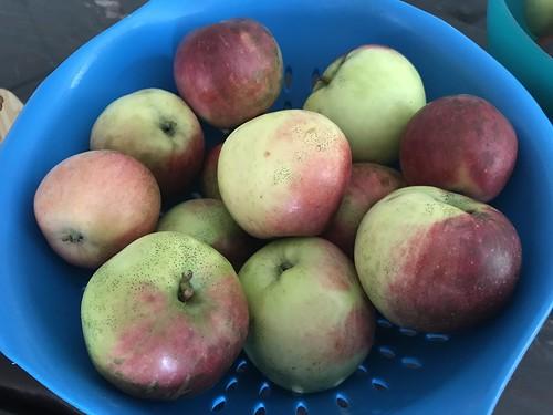 apples IMG_0197