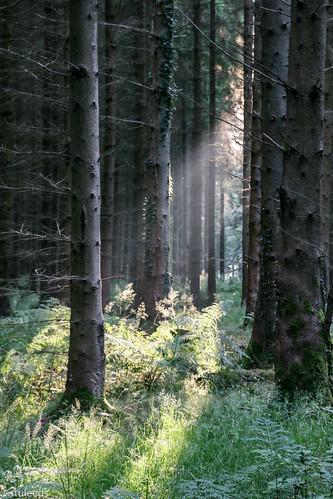 forestofdean gloucestershire sunrise