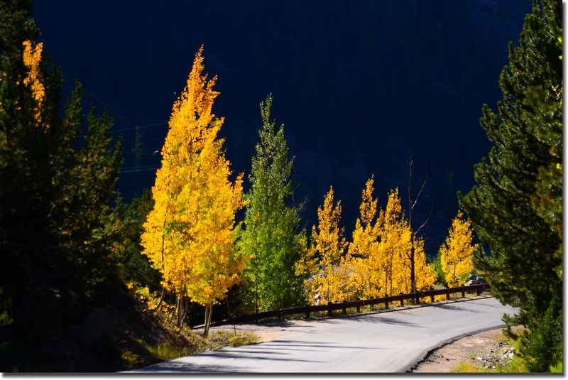 Fall colors, Guanella Pass, Colorado (3)