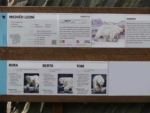 Eisbären, Zoo Prag