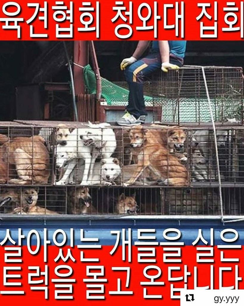 Korean Dog Farmers Association Demo 092217 (1)