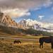 my dark horses by cherryspicks (on/off)