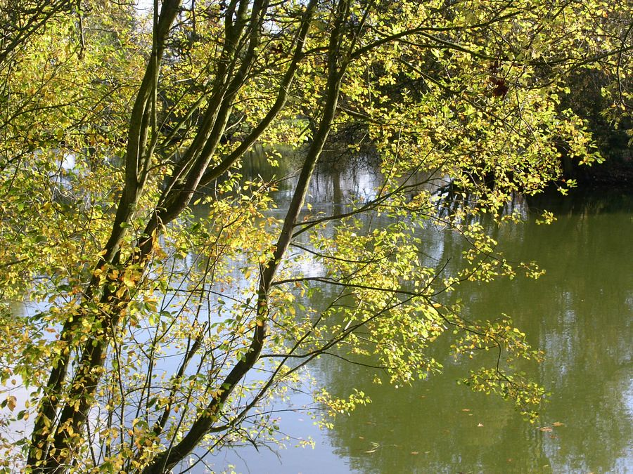 Lake near Loseley House