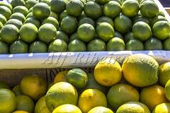 Alf Ribeiro 0095 0105