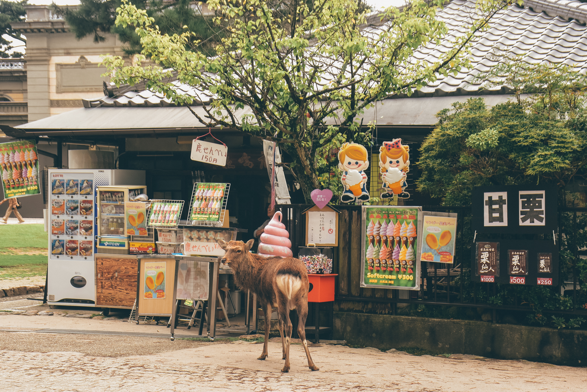 nara travel guide - 19