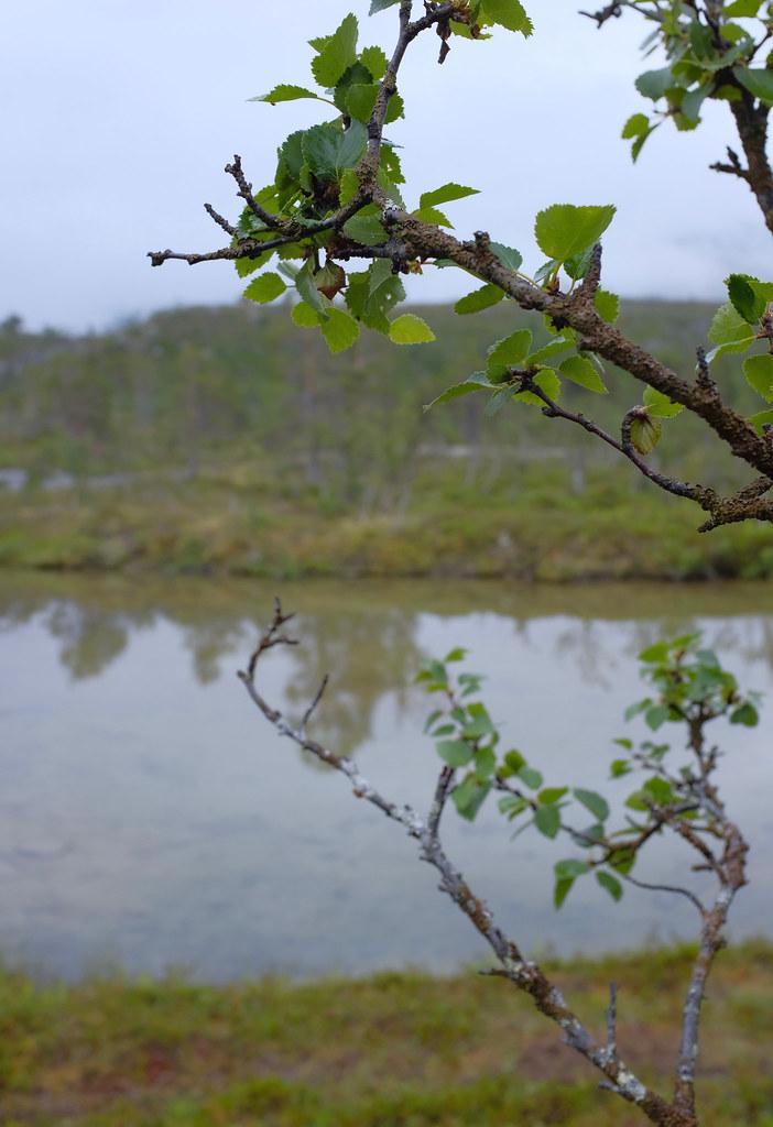 Blåvatnet Lyngen