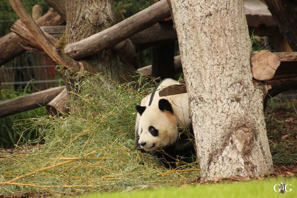 Besuch Zoo Berlin 24.07.201733