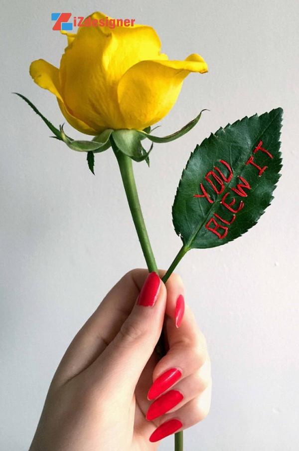 Thông điệp bằng chỉ thêu trên hoa hồng của Sophie King