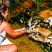 Petting Goats 2 @ 2016 Chesterfield County Fair - Chesterfield, VA