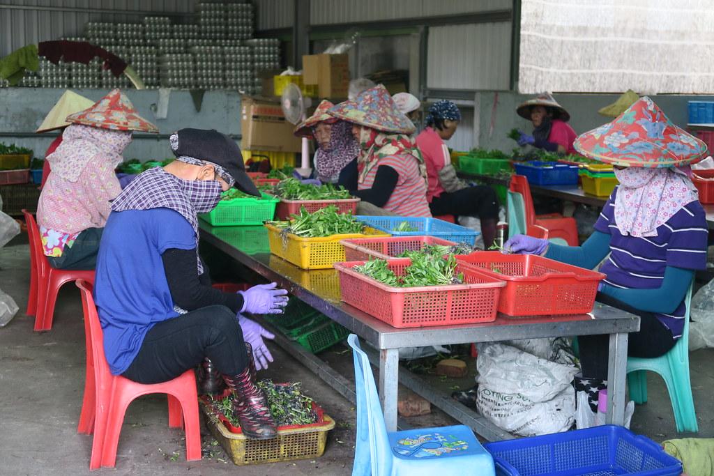 台灣香蕉科技園區 (9)