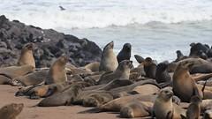 Cape Cross, NamibRand Nature Reserve & Kolmaskop, Namibia, 3DR Solo, Go Pro Hero 4, Black Edition & Nikon, D5300