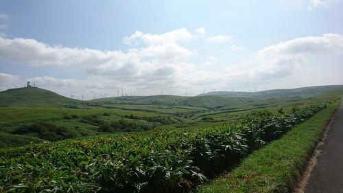 青山高原の上位互換 標高僅か百ちょいでこの景色はカムイ