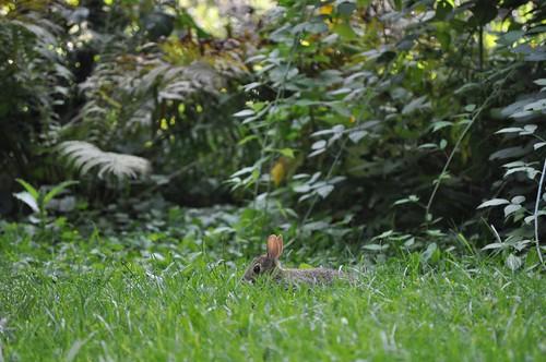 Crouching bunny, hidden mammal.