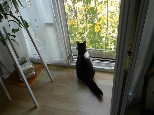 Fremde Katze im Garten!