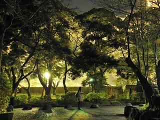 千葉公園 野球場の夜桜11