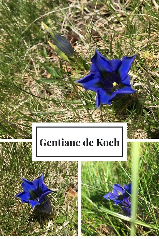 17_Gentiane Koch