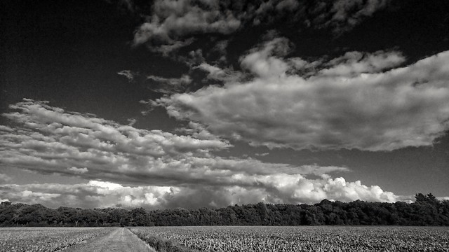 Field + forest + clouds = landscape