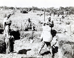 Marines Building Emplacements on Raider's Ridge, Guadalcanal, circa 1942