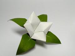 Flower by Roman Diaz