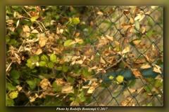 Rete con foglie