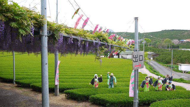 千財農園(39)