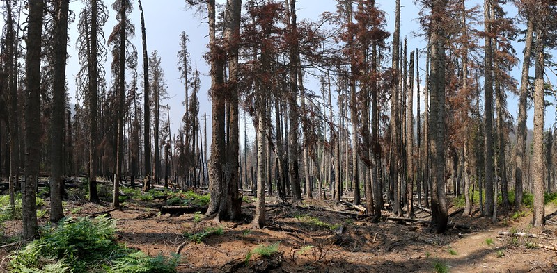 Hiking through the burnt zone due to the Buck Creek Fire of 2016 on the Buck Creek Trail