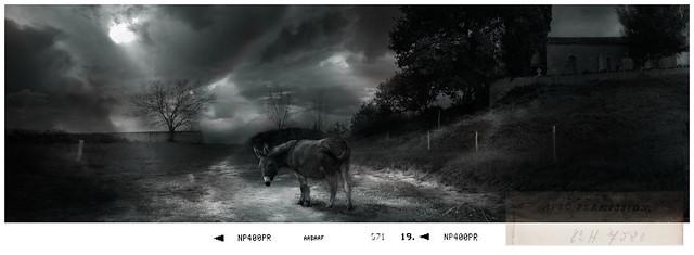 Le vieil âne