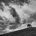 Wiesing Tree by ShirleyGrant
