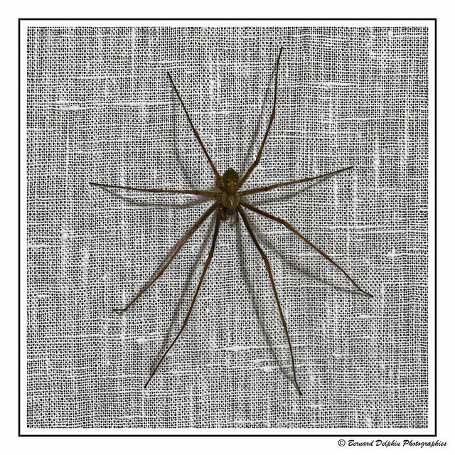 Araignée du soir ....
