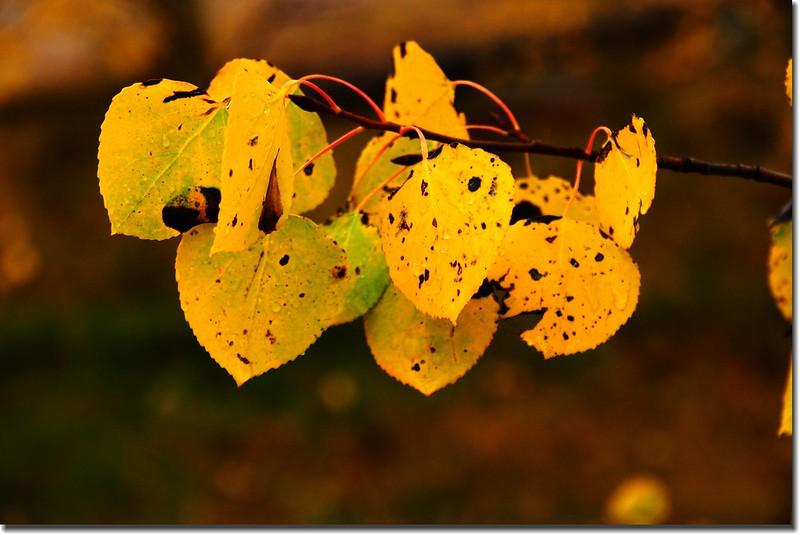 Fall colors, Kenosha Pass (8)