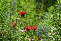 Flower horde