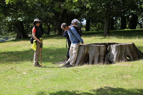 By a large tree stump - Petworth House