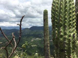 Hierve el Agua cactus