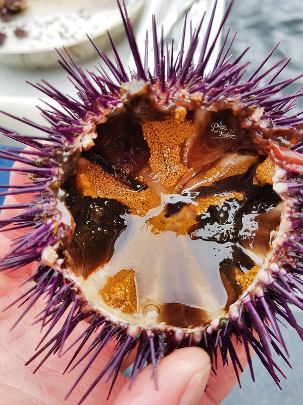 sea urchin inside