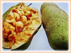 Half-opened Artocarpus integer (Chempedak, Cempedak, Champada, Champekak, Chempedak Utan), exposing its fleshy and sweet fruits, 2 Sept 2017