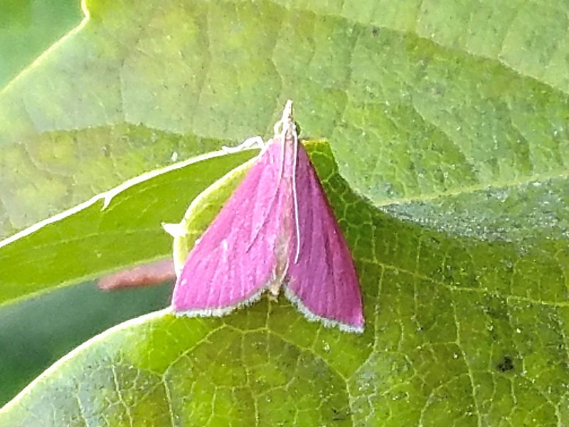 20170813_Moth