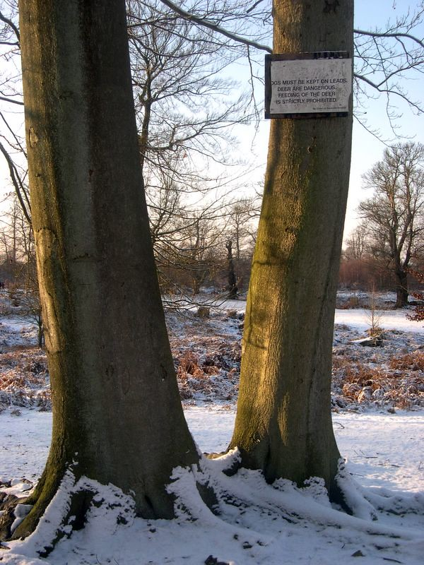 Trees in Knowle Park