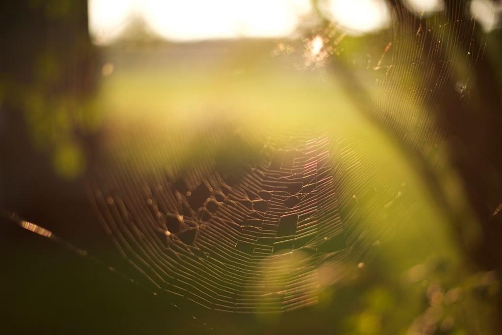When Life is Still in the Midst of a Fallow Season - Ann Voskamp