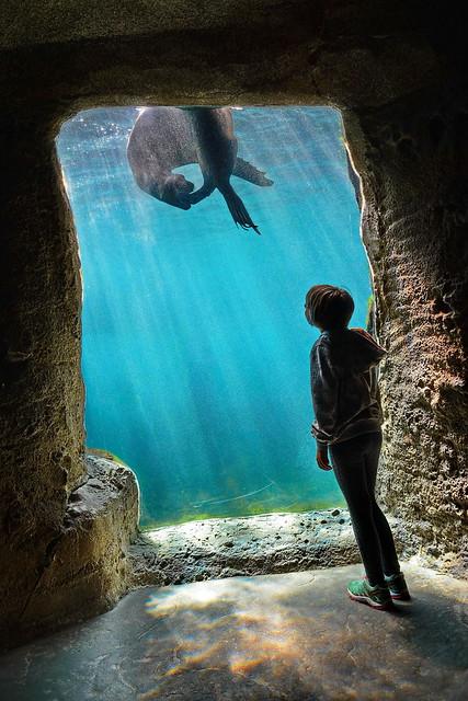 Seehund Aquarium