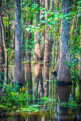 Swamp Tree Growth