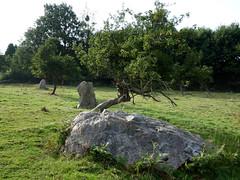 L'alignement de menhirs de la Bouaderie près de Gosné - Ille-et-Vilaine - Septembre 2017 - 03 - Photo of Liffré
