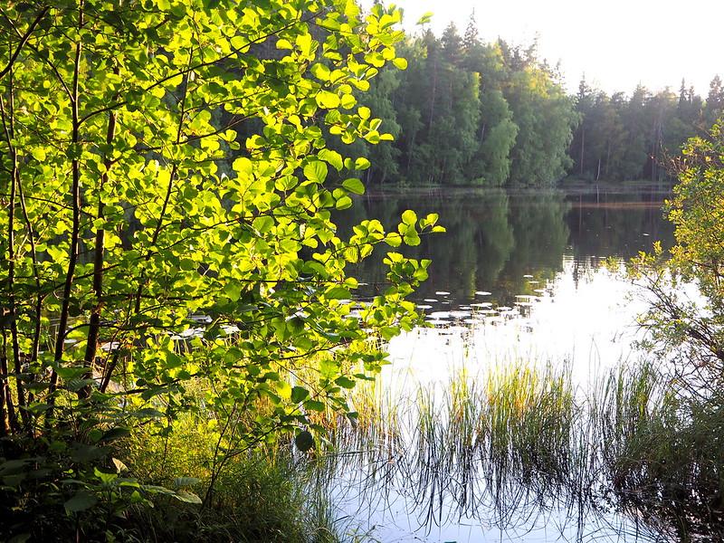 halimasjärven luonnonsuojelualue