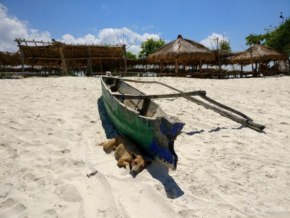 tajung aan beach dog