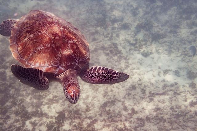 Fotografias bajo el agua en México en Fotografia Submarina37274322932_17dc385f40_z