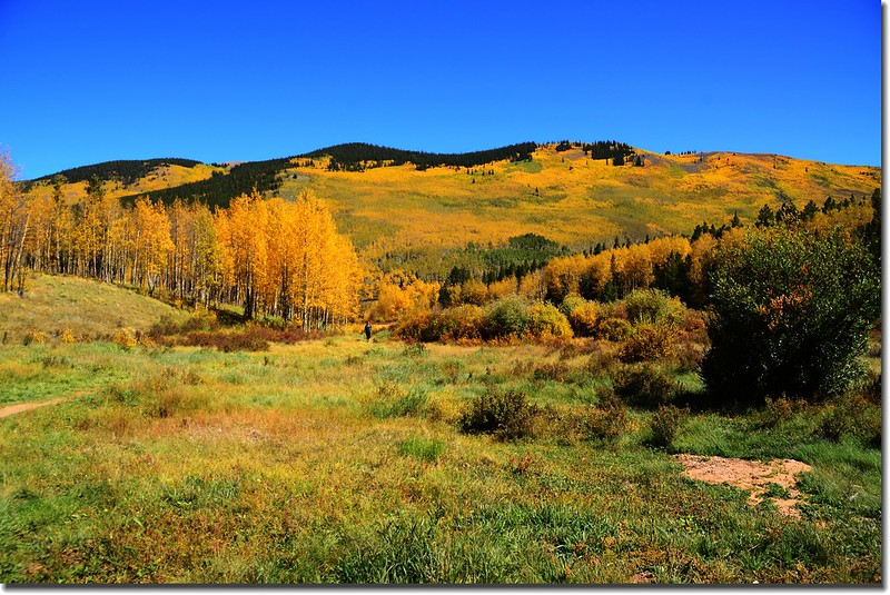 Fall colors, Kenosha Pass  (41)