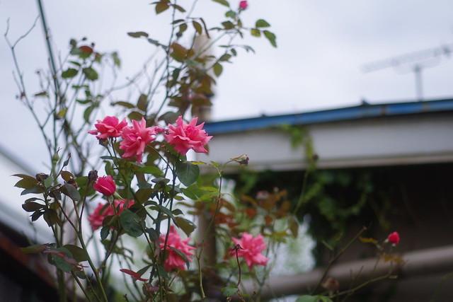 Bloom toward the sky