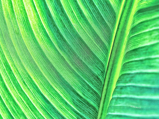 Abstract Macro: Palmistry