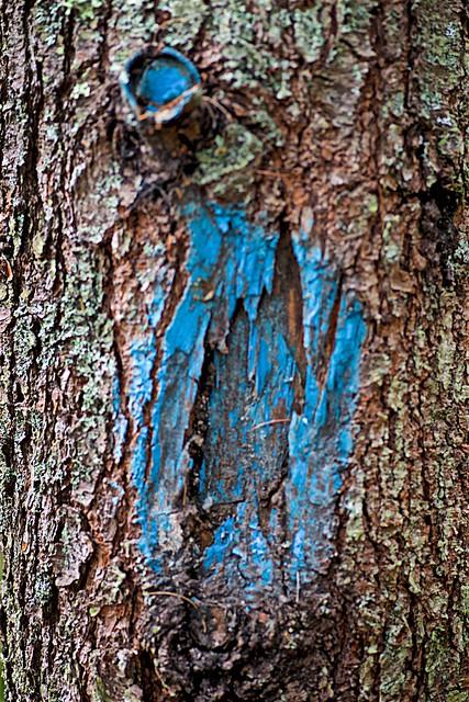 blue agony